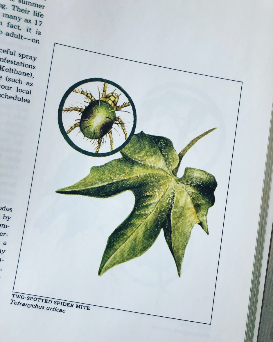 Spider Mite 101 – A Web of Why – Forrest Street