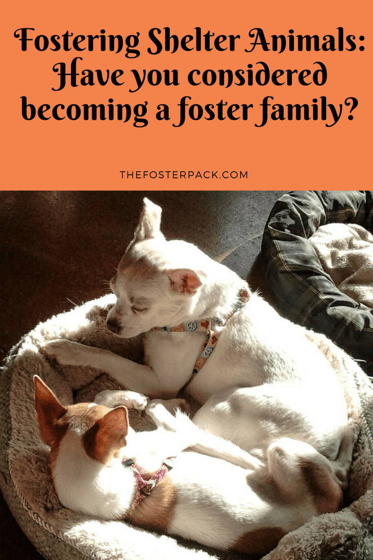 Fostering Shelter Animals: Have you considered becoming a foster family?