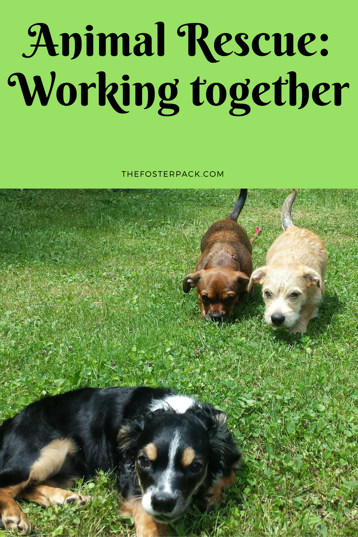 Animal Rescue: Working together