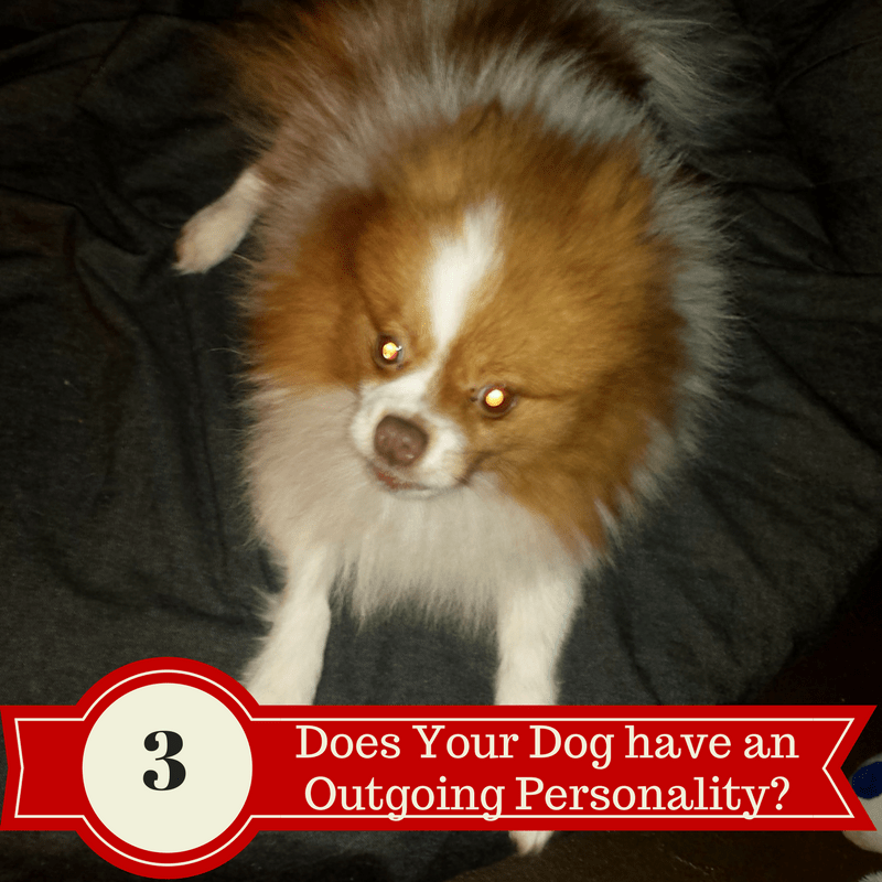Does your dog have an Outgoing Personality?