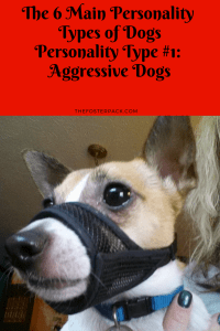 Personality Types: Aggressive Dogs