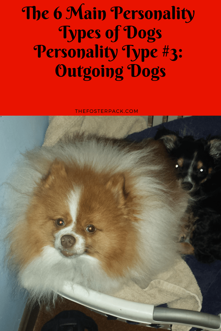 Personality Type #3: Outgoing Dogs