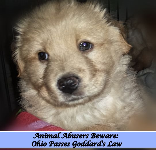 Goddard's Law: Animal Abuse now a felony in Ohio