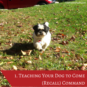 Teaching Your Dog to Come (Recall) Command