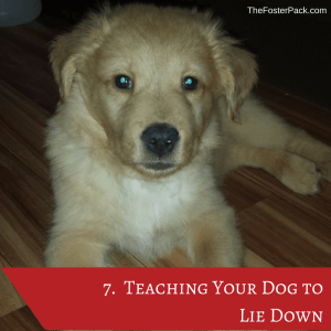 Teaching Your Dog to Lie Down