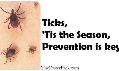 Ticks, 'Tis the Season, Prevention is key.