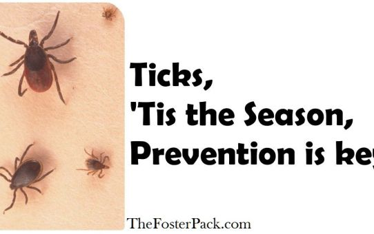 Ticks, 'Tis the Season, Prevention is key.