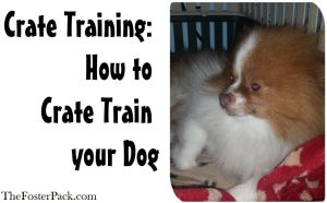 Crate Training: How to Crate Train your Dog