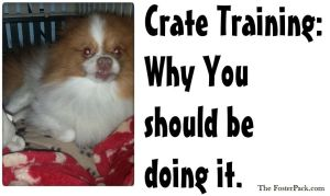 Crate Training: Why you should be doing it
