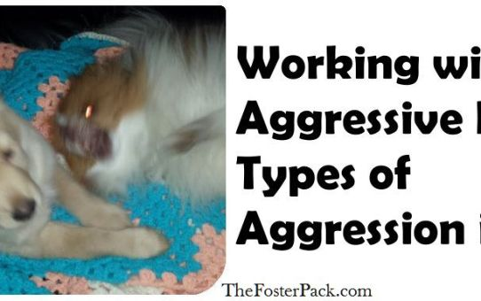 Working With Aggressive Dogs: Types of Aggression in Dogs