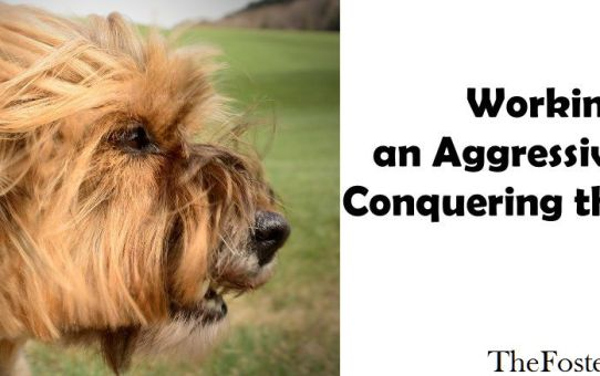 Working With an Aggressive Dog: Conquering the Fear