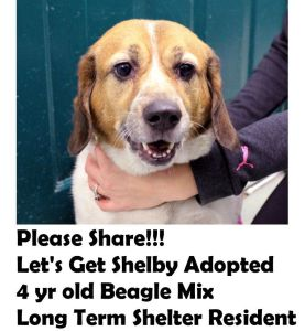 Get Shelby adopted