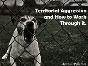 Territorial Aggression and Working Through it.