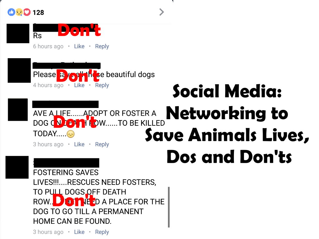 Social Media: Networking to Save Animals Lives, Dos and Don'ts