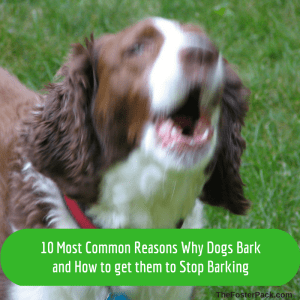 10 Most Common Reasons Why Dogs Bark and How to get them to Stop Barking