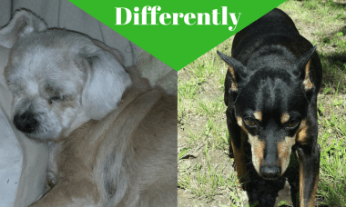 Aging Dogs, Different Dogs Age Differently