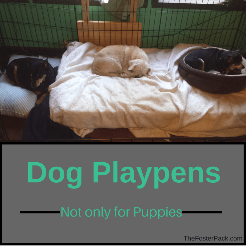Dog Playpens, Not only for Puppies