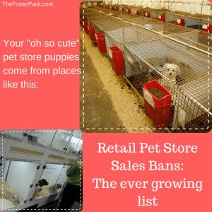 Retail Pet Store Sales Bans: The ever growing list