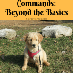 14 Dog Training Commands Beyond The Basics The Foster Pack
