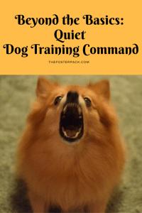 Beyond the Basics: Quiet Dog Training Command