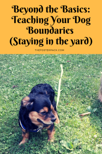 Beyond the Basics: Teaching Your Dog Boundaries (Staying in the yard)