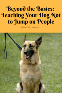Beyond the Basics: Teaching Your Dog Not to Jump on People