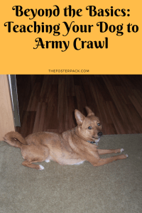 Beyond the Basics: Teaching Your Dog to Army Crawl