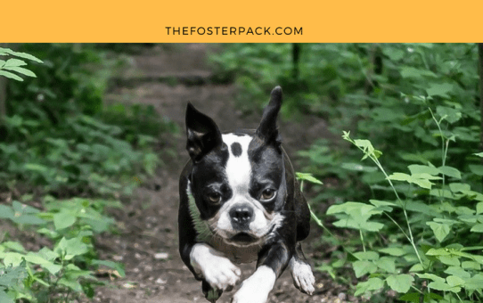 Beyond the Basics: Teaching Your Dog to Jump Over Things