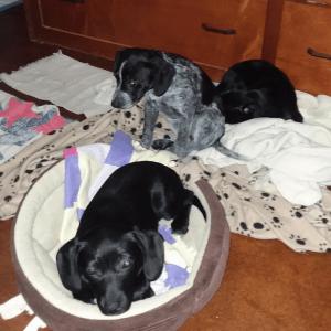 Little Lucky, Sheena and Socks