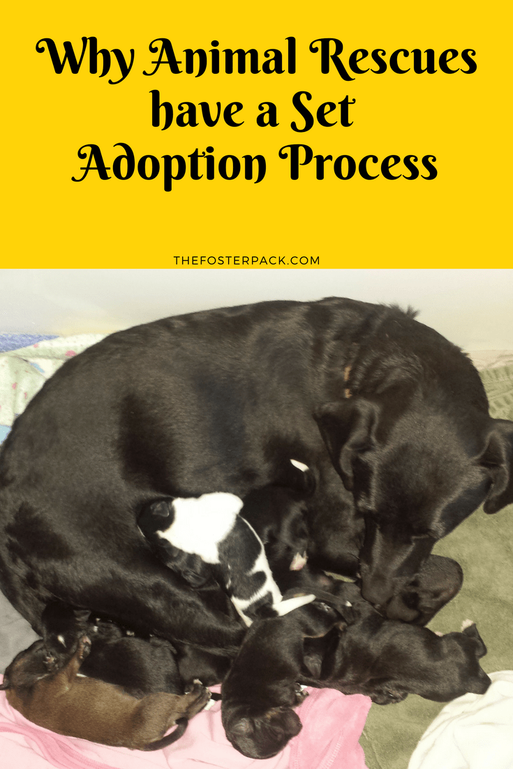 Why Animal Rescues have a Set Adoption Process