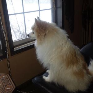 Window Woobie