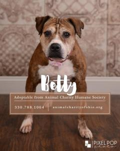 Betty, Senior Boxer, Pit Bull Mix