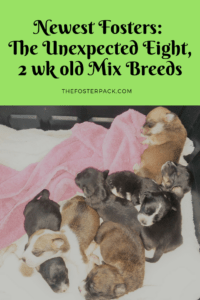 New Fosters: The Unexpected Eight, Bottle feeding puppies