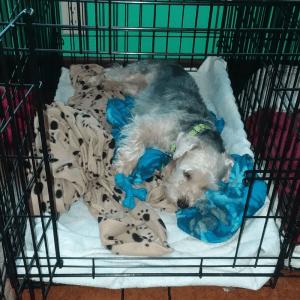 Ryder, tired boy