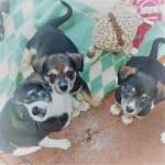 Bobbie, Jett and Neo
