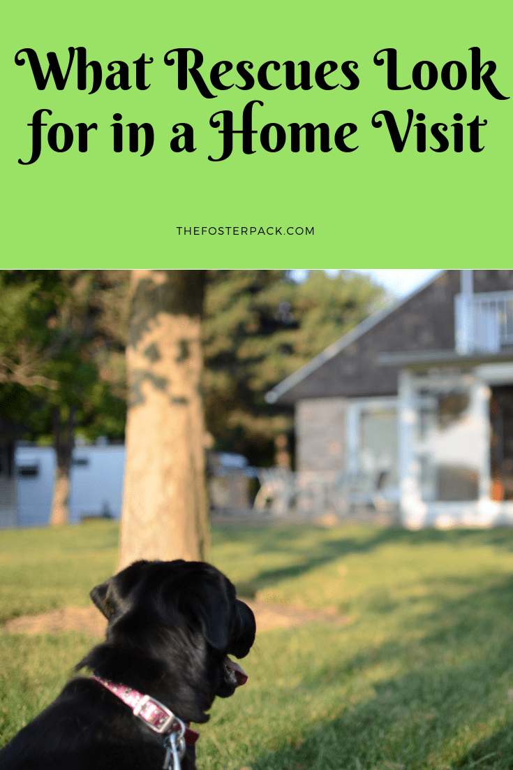 What Rescues look for in a Home Visit