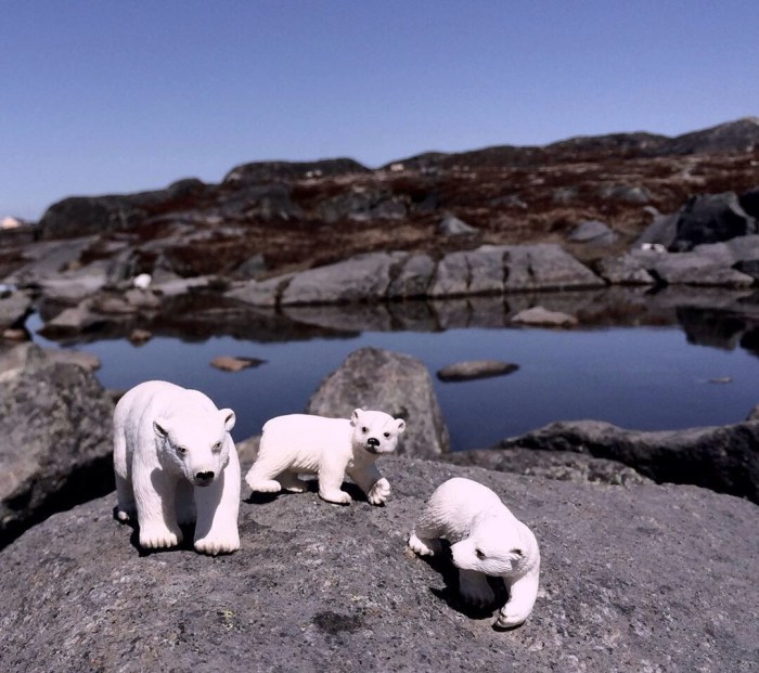 Wild Greenland Wild Animals The Fourth Continent