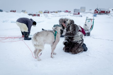 Dog sledding in Ilulissat. You should not touch the dogs unless the driver allows you.
