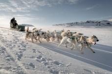 Dog sledding in Ilulissat.
