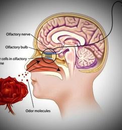 flower throat diagram [ 1180 x 1035 Pixel ]