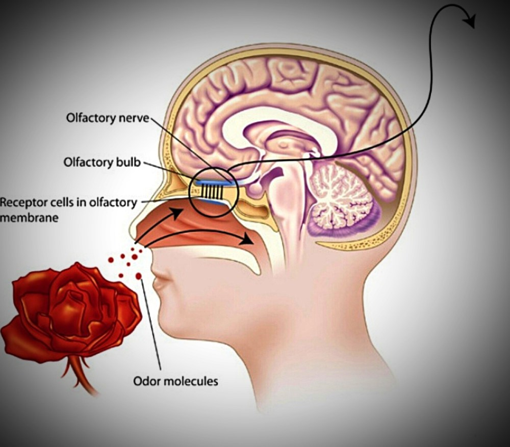 medium resolution of flower throat diagram