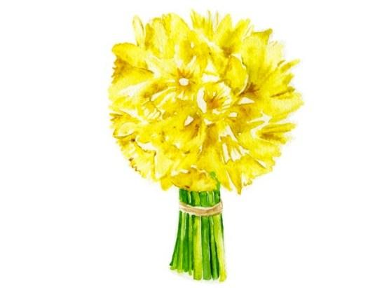 Jessie Kanelos Weiner-daffodils