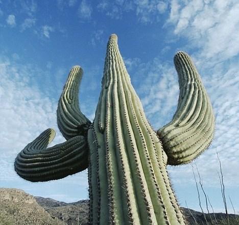 cactus death bizarre