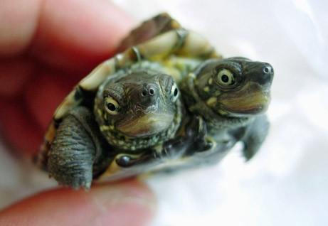 weird turtle