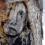Sad Face in Tree