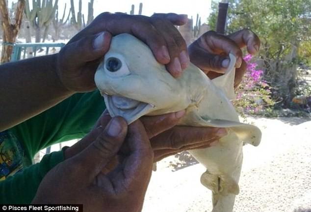 bizarre shark