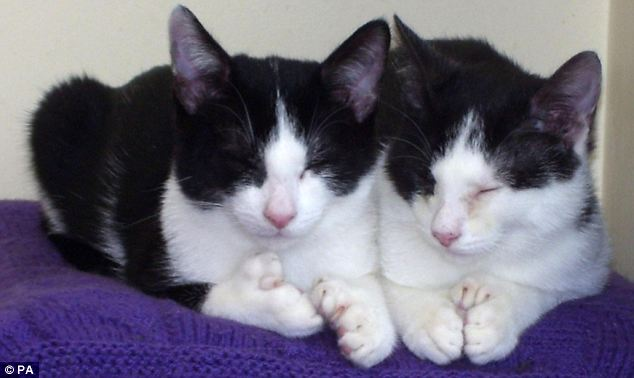 The kittens with 18 extra toes