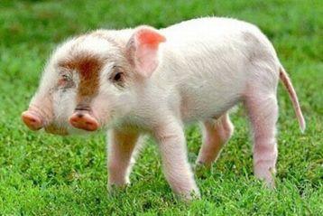 bizarre animal photo