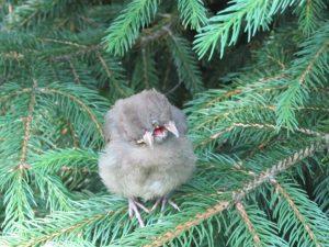 bizarre bird
