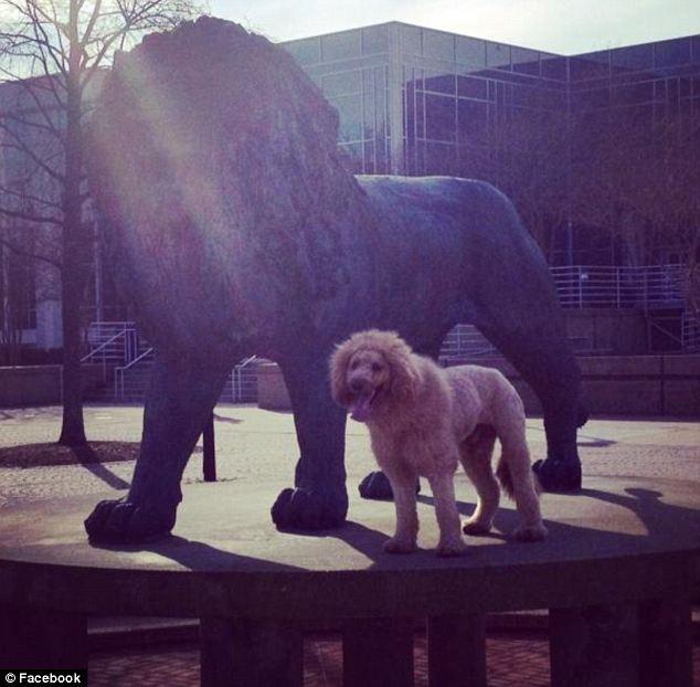 dog lion